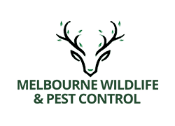 melbourne-wildlife-and-pest-control